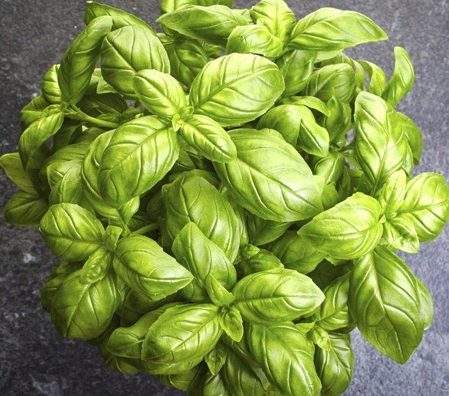 Basilico pianta aromatica per cucina in vaschetta: prezzo ...